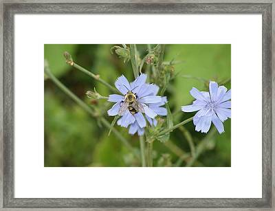 Bumble Bee Framed Print by Heidi Poulin