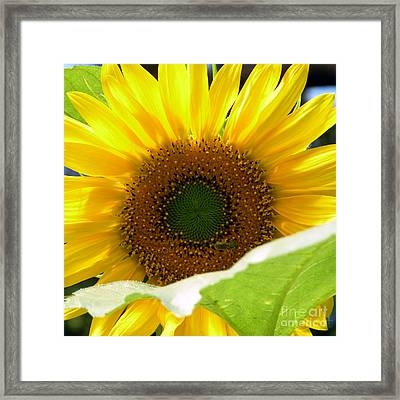 Bundle Of Joy Framed Print
