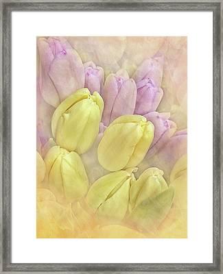 Burst Of Spring Framed Print