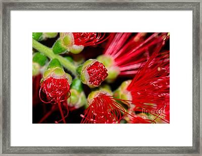 Bursting Out By Kaye Menner Framed Print by Kaye Menner