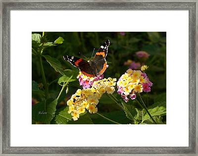Framed Print featuring the photograph Busy Butterfly Side 2 by Felipe Adan Lerma