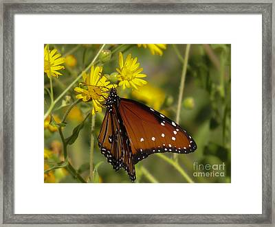 Butterfly 3 Framed Print