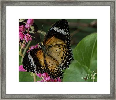 Butterfly 6 Framed Print