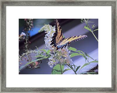 Butterfly Bush ,butterfly Included Framed Print by Melissa Messick