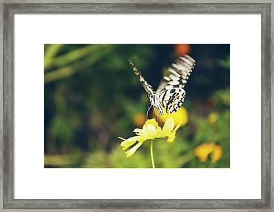 Butterfly On Flower Framed Print by Nguyen Truc
