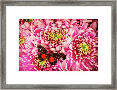 Butterfly On Spider Mums Framed Print