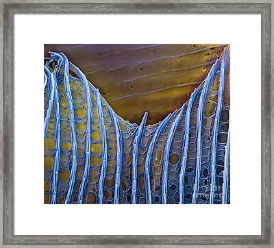 Butterfly Wing Scale Sem Framed Print