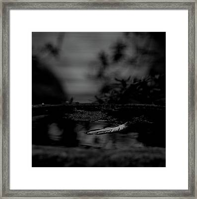 A Feeling Of Floating Weightlessly - Bw Framed Print by Marilyn Wilson
