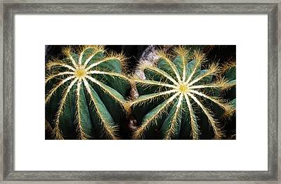 Framed Print featuring the photograph Cactus  by Catherine Lau