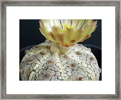 Cactus Flower 1 Framed Print