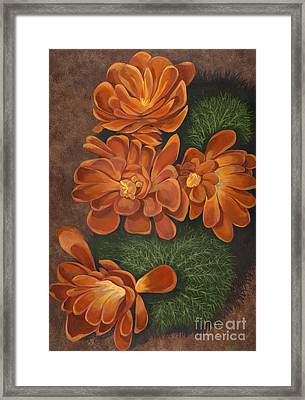 Cactus Flowers Framed Print by Edward Williams