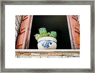 Cactus Framed Print by Tom Gowanlock
