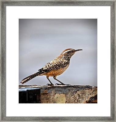 Framed Print featuring the photograph Cactus Wren by Robert Bales