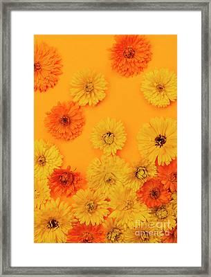 Calendula Flowers On Orange Background Framed Print by Elena Elisseeva