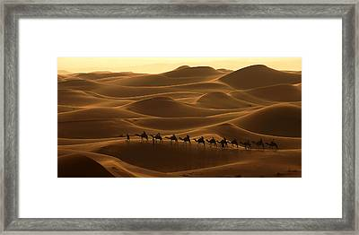 Camel Caravan In The Erg Chebbi Southern Morocco Framed Print