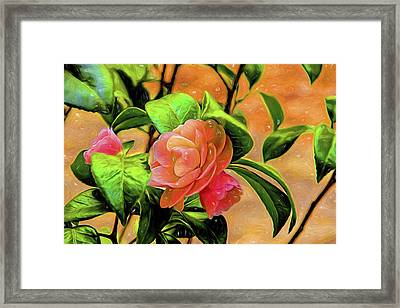 Camellia Candy Framed Print