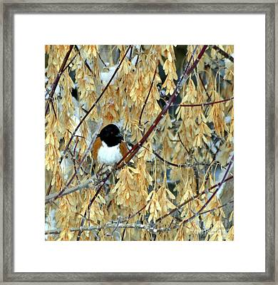 Framed Print featuring the photograph Camouflage by Juls Adams