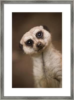 Can I Help You Framed Print
