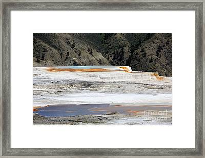 Canary Spring At Mammoth Hot Springs Upper Terraces Framed Print by Louise Heusinkveld