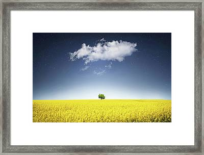 Canola Field Framed Print by Bess Hamiti