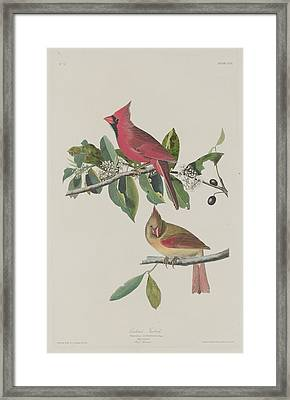 Cardinal Grosbeak Framed Print