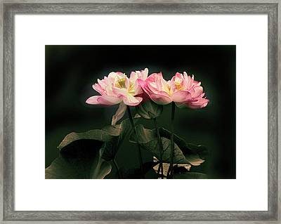 Caressed Framed Print