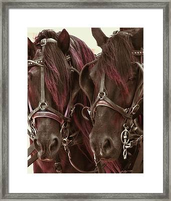 Carriage Ponies  Framed Print by Dressage Design