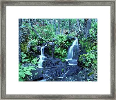 Cascade Creek And Ferns  Framed Print