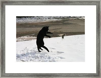 Cat And Mouse Tango Framed Print