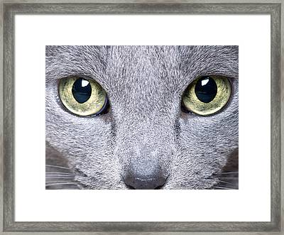 Cat Eyes Framed Print by Nailia Schwarz