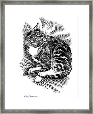 Cat Grooming Its Fur, Artwork Framed Print
