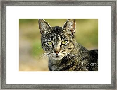 Cat Framed Print by Marc Bittan
