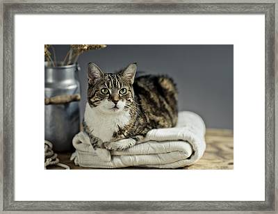 Cat Portrait Framed Print