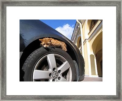 Cat Rest Framed Print by Yury Bashkin