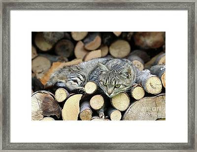 Framed Print featuring the photograph Cat Resting On A Heap Of Logs by Michal Boubin