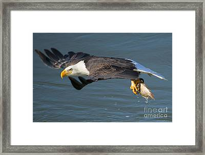 Catch In Hand Framed Print by Mike Dawson