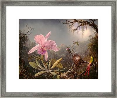 Cattleya Orchid And Three Hummingbirds Framed Print by Martin Johnson Heade