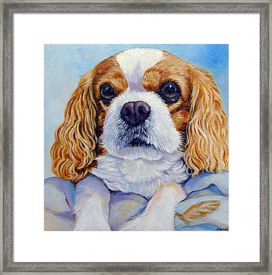 Cavalier King Charles Spaniel Framed Print by Lyn Cook