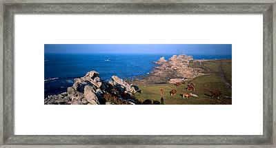 Celtic Horses Grazing In A Field Framed Print by Panoramic Images