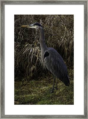 Checking Things Out Framed Print