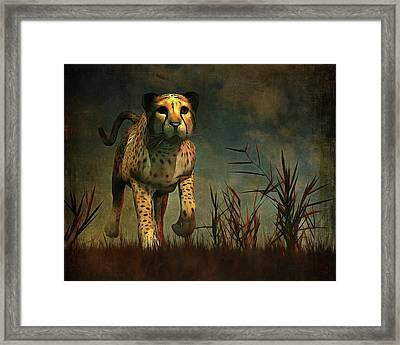 Cheetah Hunting During The African Night Framed Print