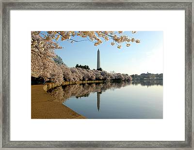 Cherry Blossom Framed Print by Marie Taylor-Morrison