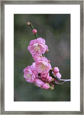 Cherry Flower Framed Print
