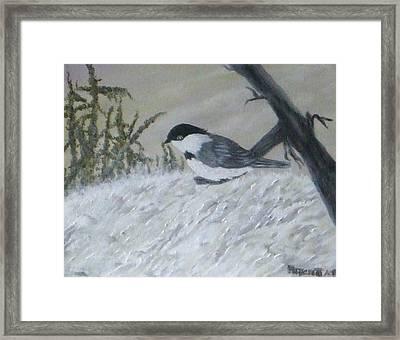 Chickadee Framed Print by Rebecca  Fitchett