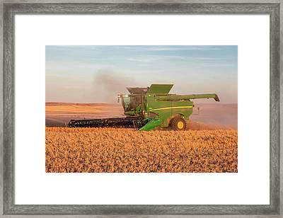 Chickpea Harvest Framed Print by Todd Klassy