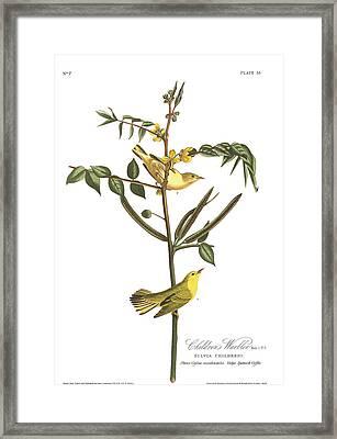 Children's Warbler Framed Print by John James Audubon