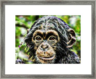 Chimpanzee Collection Framed Print