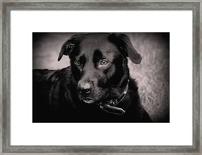 Chino Framed Print