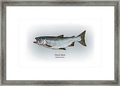 Chinook Salmon Framed Print by Ralph Martens