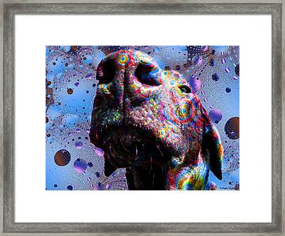 Chocolate Lab Nose Framed Print by Roger Wedegis